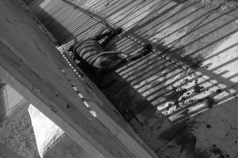AUDIO: El pitbull de un funcionario atacó a ocho vecinos en Morón