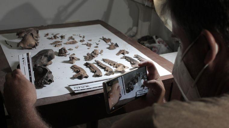 FOTO: Extraen ADN en restos fósiles de hace 30 mil años en Camet Norte