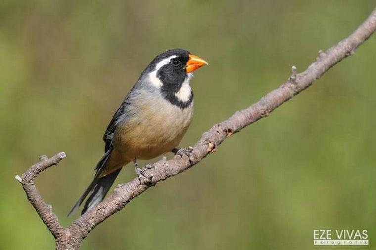 FOTO: Avistaje de aves en Estancia Guayascate