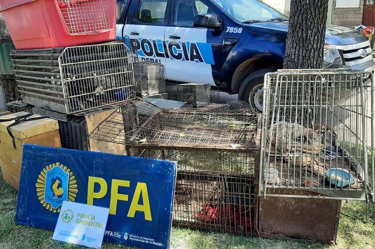 FOTO: Rescataron 57 animales silvestres en La Carlota.