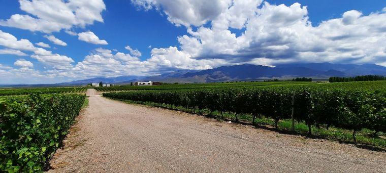 AUDIO: Buena temporada en Mendoza gracias al turismo interno