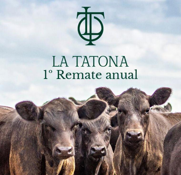 AUDIO: Javier Gaiser, La Tatona SAS