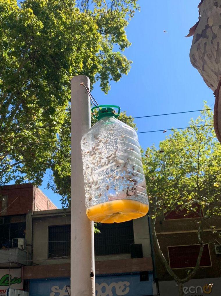 AUDIO: Invasión de abejas en una calle principal de Mendoza