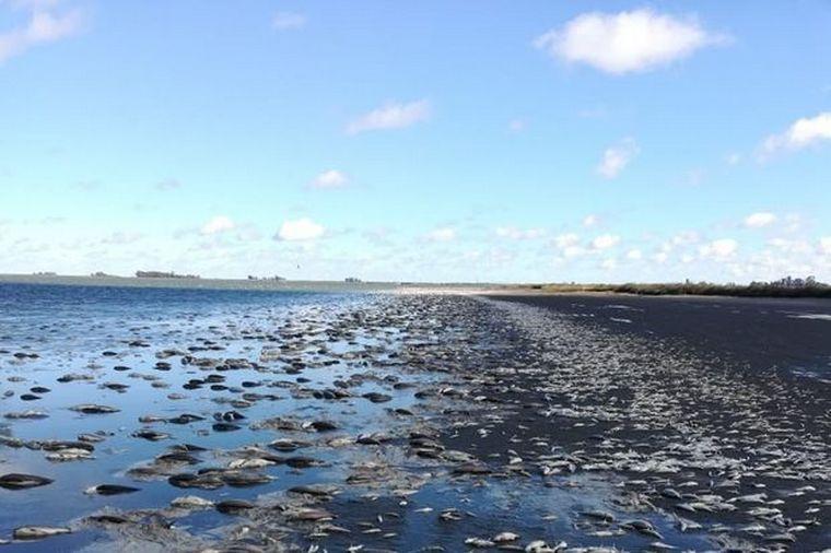 AUDIO: Miles de peces aparecieron muertos en una laguna de Junín (Foto: Diario Democracia)