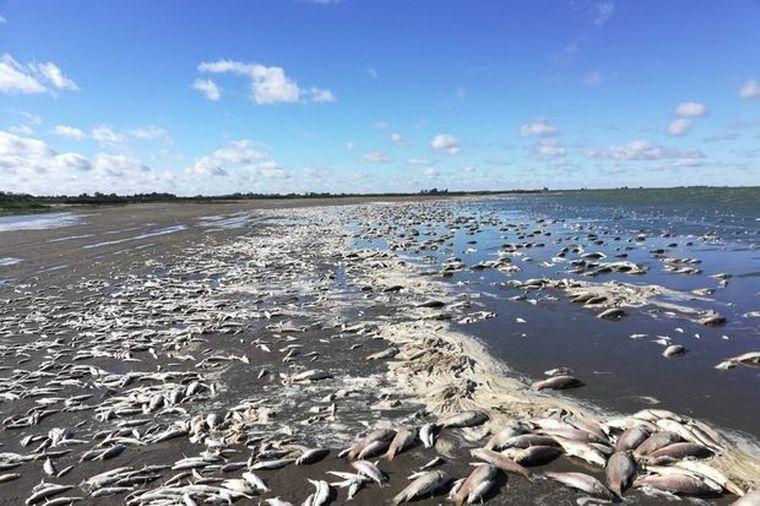 FOTO: Miles de peces aparecieron muertos en una laguna de Junín (Foto: Diario Democracia)
