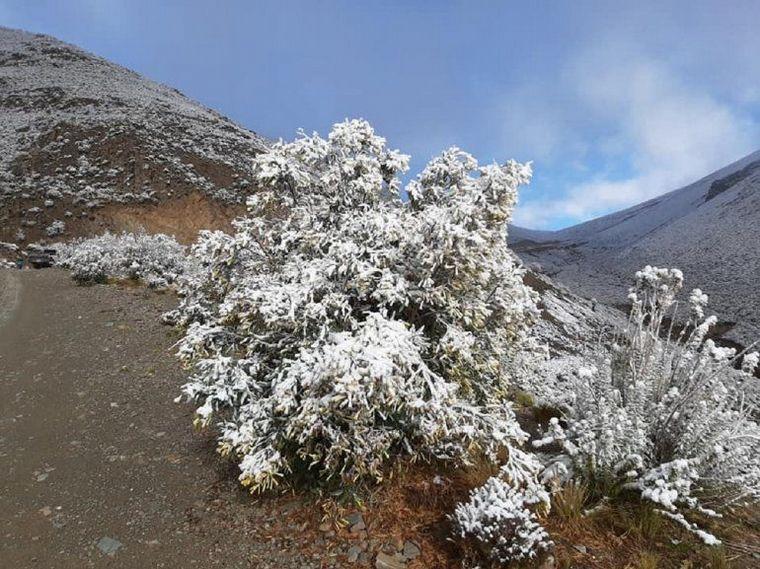 AUDIO: El norte de Jujuy amaneció cubierto de nieve