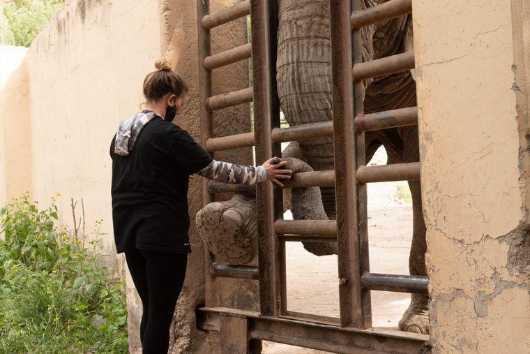 AUDIO: Trasladan dos elefantes del Ecoparque Mendoza a un santuario en Brasil
