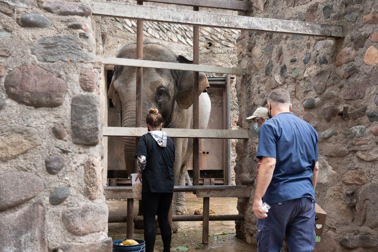 FOTO: Trasladan dos elefantes de Mendoza a un santuario en Brasil