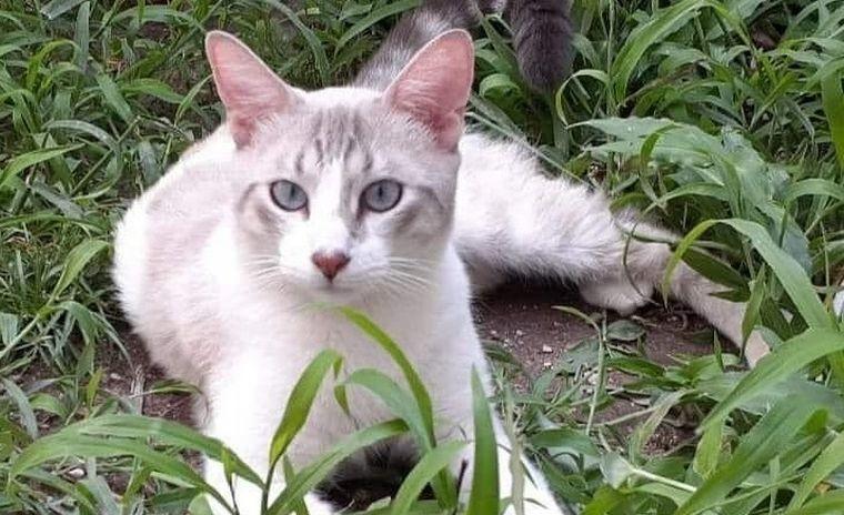 AUDIO: Garritas Felices dio en adopción a 568 gatitos