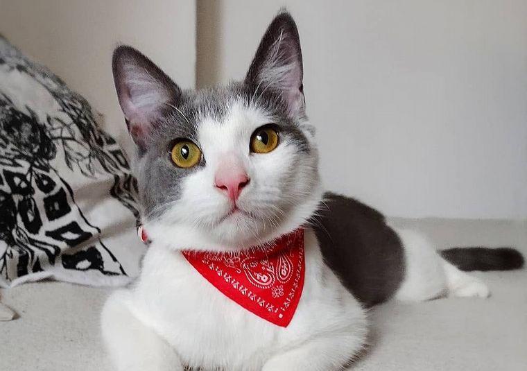 FOTO: Gatos en adopción