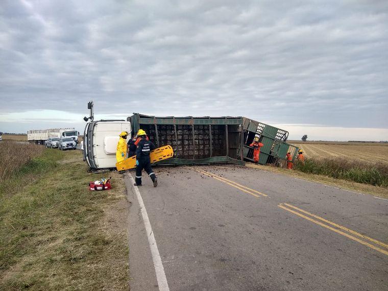 AUDIO: Volcó un camión con ganado y faenaron animales vivos