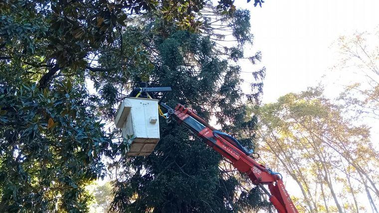 AUDIO: Rescataron a un pavo real de un pino de 15 metros en Rosario