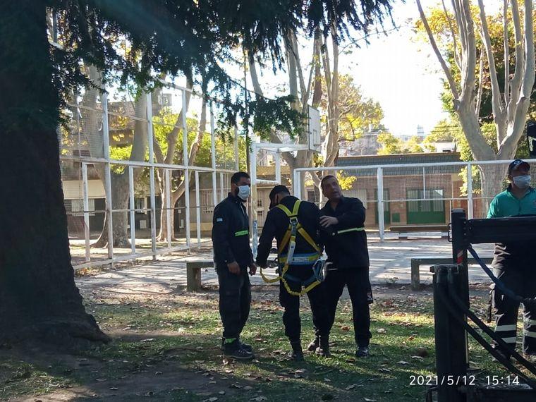FOTO: Rescataron a un pavo real de un pino de 15 metros en Rosario