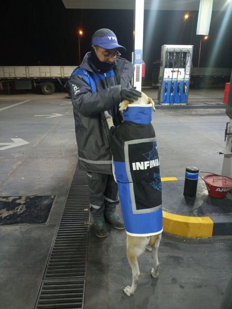 FOTO: Empleados adoptaron una perra y le hicieron un abrigo