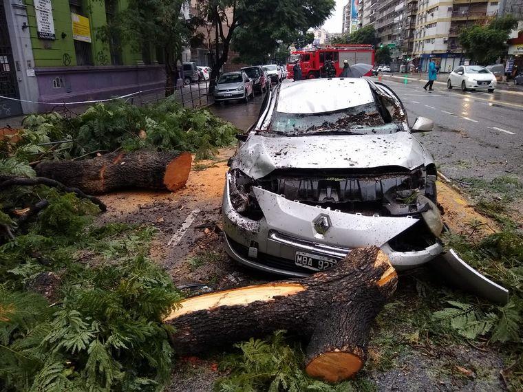 AUDIO: Un árbol cayó sobre un auto que circulaba: no hay heridos