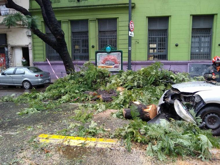 FOTO: Árbol cayó sobre un auto