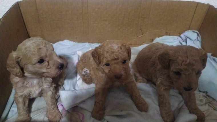 FOTO: Ofrecen recompensa por tres cachorros de 20 días robados en barrio Poeta Lugones