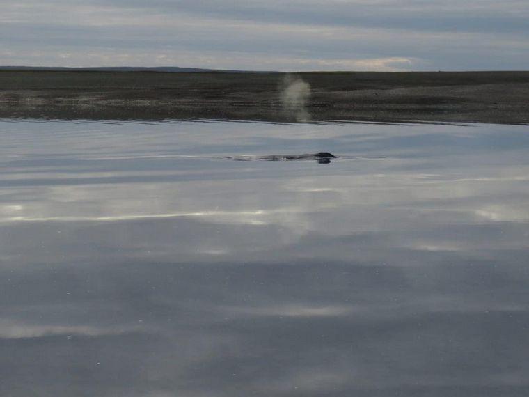 FOTO: Trabajan para liberar a una ballena que quedó varada