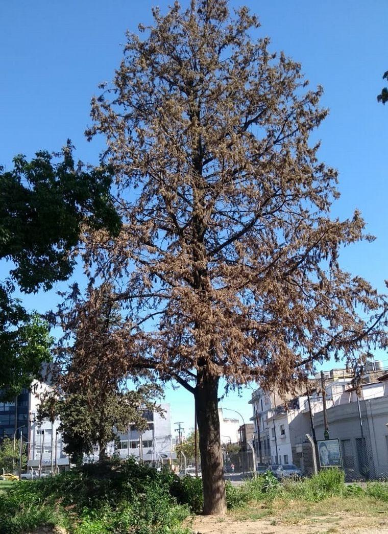 AUDIO: Sacaron 18 árboles de parque Las Heras por mal estado