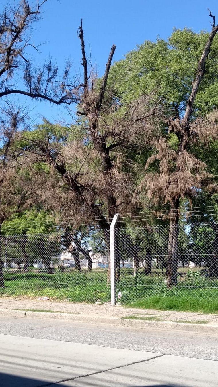 FOTO: Árboles en mal estado en parque Las Heras