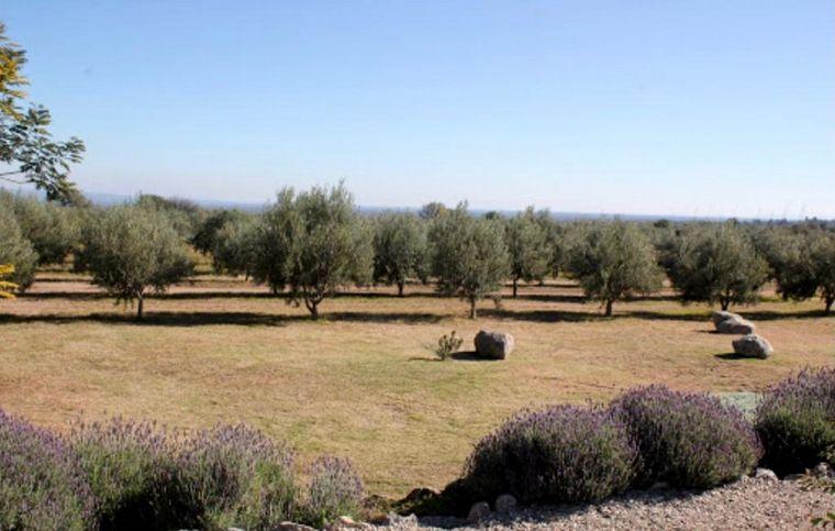 FOTO: Producción en aceite de oliva en Traslasierra