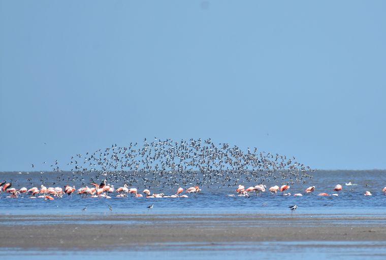 FOTO: El Parque Ansenuza, cada vez más cerca de ser una realidad (Foto: Aves Argentinas)