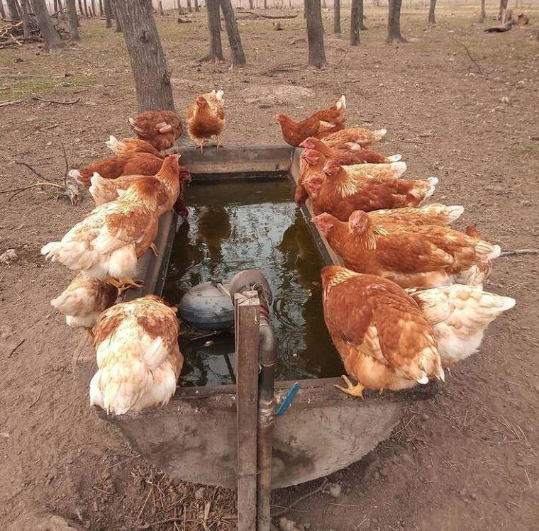 FOTO: Abril cría 800 gallinas y vende los huevos en su pueblo, Villa Mugueta, en Santa Fe.