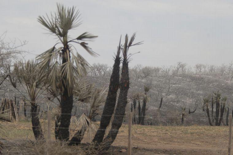FOTO: Incendio en Caminiaga, Córdoba.