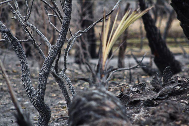 FOTO: El Pantano, a pocos kilómetros del Cerro Colorado.