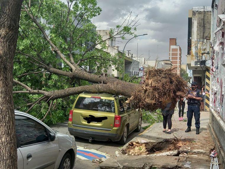 FOTO: Un árbol aplastó una camioneta y no hay muertos de milagro.