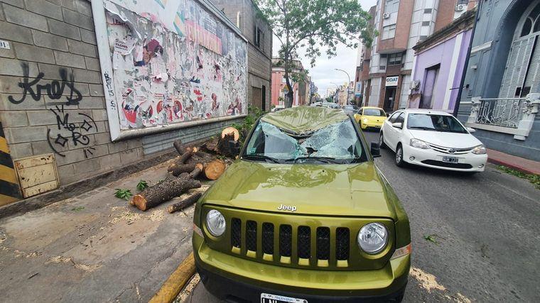 FOTO: Un árbol cayó sobre una camioneta en ciudad de Córdoba.