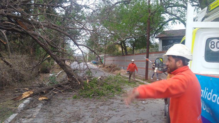 AUDIO: Árbol cayó sobre un portón en Córdoba.