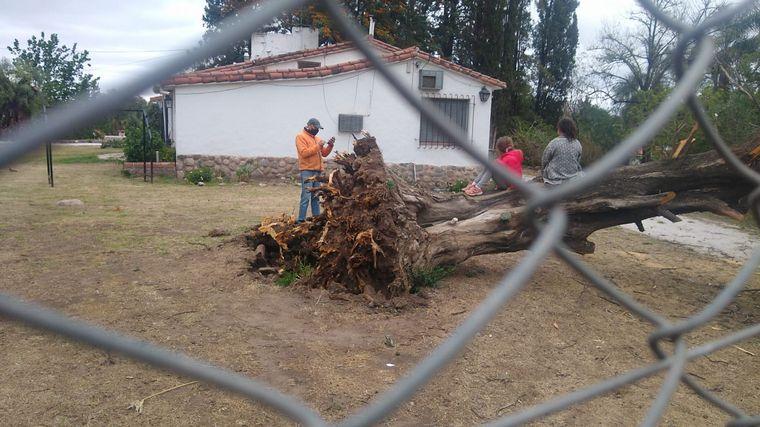 FOTO: Árbol cayó sobre un portón en Córdoba.
